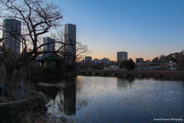 Coucher de soleil à Ueno, entre nature et gratte-ciel