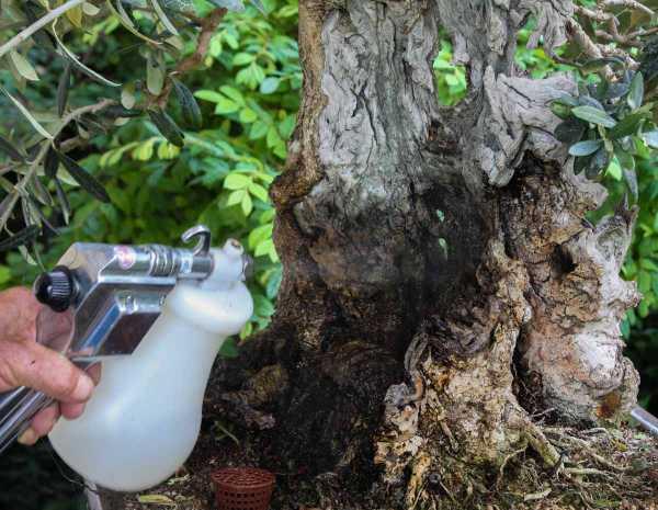 Fasi della pulizia del legno secco