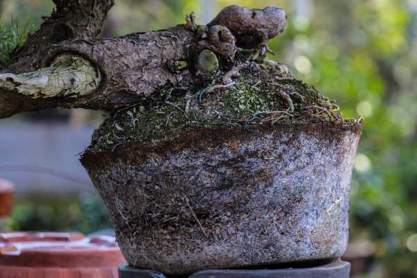 L'abondance des mycorhizes est un symptôme de grande santé.