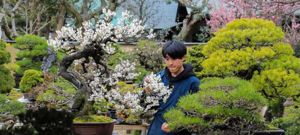 photos-du-japon