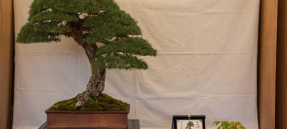 festival-du-bonsa-iuml-2021-andora-sv
