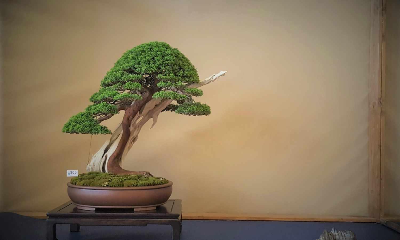 Tutto per coltivare e lavorare i tuoi bonsai